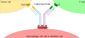500px-Catumaxomab_mechanism.svg