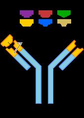 Antibody.svg