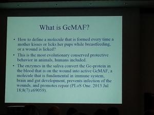 GcMAF1