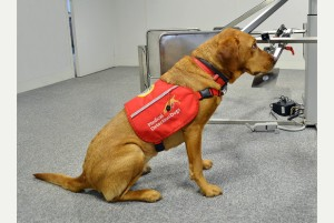 04/09/14 Medical Detection Dogs feature - Great Horwood